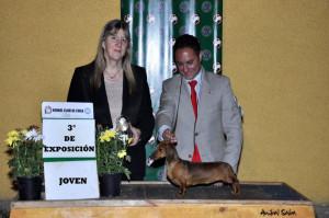 3° DE EXPOSICIÓN JOVEN HELD FARM DIVA DIVINA MS. JUEZ:FRANCES SMITH