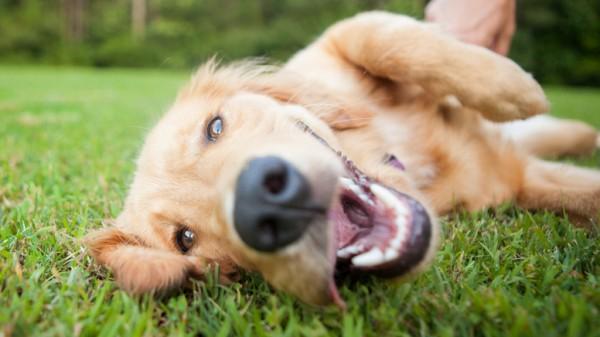 Cómo disminuir el estrés o ansiedad en tu perrito